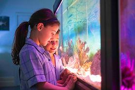 MDC_kids at fishtank.jpg