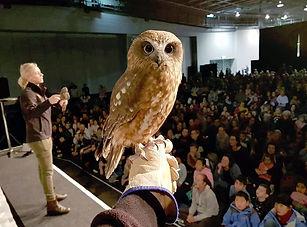 AA_owl.jpg