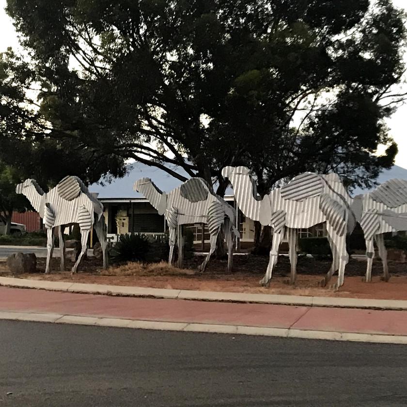 Tin camels at Norseman