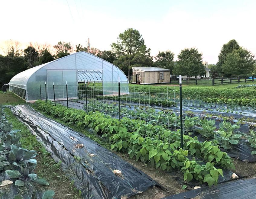 Dandelion Ridge Farm
