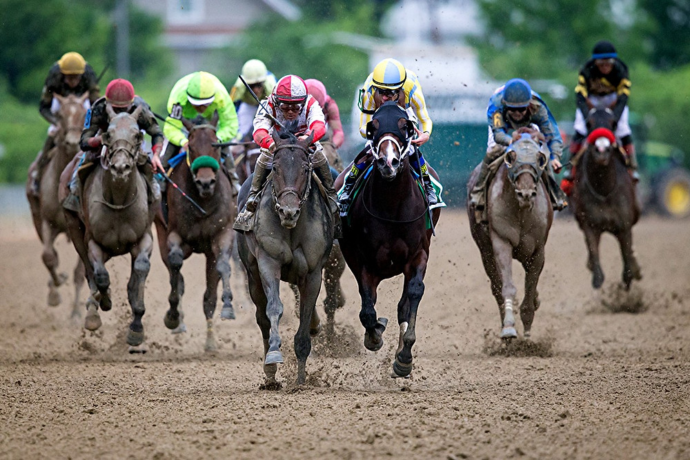 THE 2017 PREAKNESS STAKES came down to a two-horse race between Classic Empire, middle right, with Javier Castellan riding, and to his outside, Cloud Computing, middle left, with Julien Leparoux aboard. At the finish, Cloud Computing caught Classic Empire to win by a head. (Photo by Wendy Wooley/EquiSport Photos)