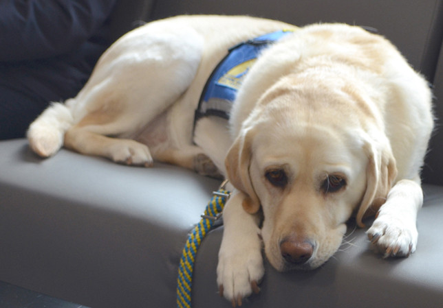 """MATILDA brings calm to kids who've experienced trauma in their lives. That, according to her handler Liz Noffsinger, is """"her biggest gift."""" Matilda, who will be 5 years old in July, is available to help abused children in Woodford, Bourbon, Scott and Fayette counties. (Photo by Bob Vlach)"""