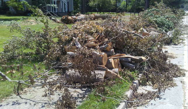 PILES OF BRUSH like these on South Main Street in Versailles will cost the city and county governments many thousands of dollars. (Photo by John McGary)