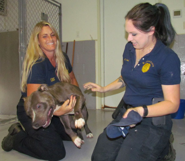 WOODFORD ANIMAL CONTROL officers Jodi Mullins, left, and Elizabeth Cecil, deal with a friendly but energetic dog (the only pet there that day) who'd been caught running loose last week. They say animal protection ordinances passed by the county and city governments a few months ago have led to more calls from concerned citizens. (Photo by John McGary)