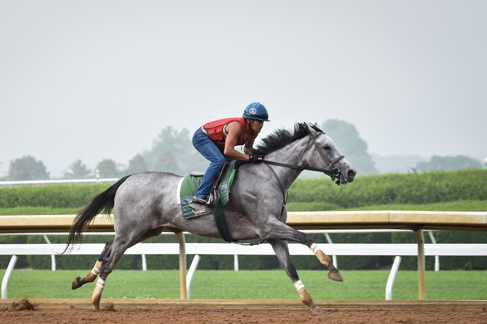 RED RUBY breezes at Keeneland before shipping to Delware where she won by thirteen lenghths Saturday, July 7 in the G3 Delaware Oaks. The filly by WinStar's Tiznow has four wins in six starts. (Photo by Mary Ellet)