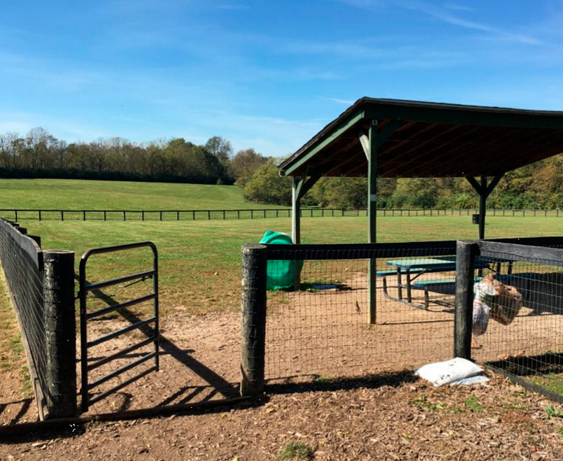 """THE DOG PARK (seen here) and tennis courts at the Woodford County park will reopen Monday, but """"if people continue to gather, then we'll have to shut them back down,"""" said Versailles-Woodford County Parks and Recreation Director Rich Pictor. (Photo submitted)"""
