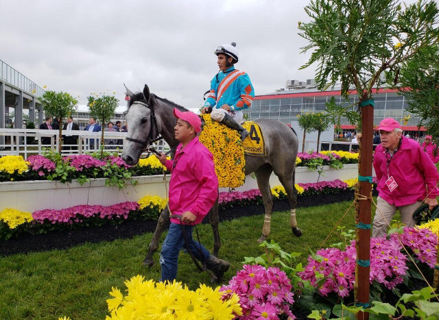 JOCKEY PACO LOPEZ AND RED RUBY parade around Pimlico Race Course after winning the Black Eyed Susan in May. Red Ruby has won four out of six starts in her career. (Photo courtesy of Brandi Nicholson)