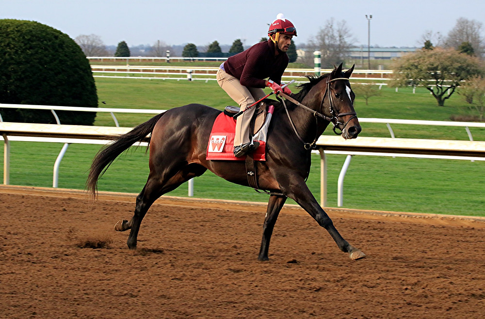 MCCRACKEN, the morning-line favorite for the $1 million Toyota Blue Grass Stakes (G2), goes for a morning workout at Keeneland on Thursday, March 30. The 3-year-old colt is also an early favorite for the Kentucky Derby (G1), which will be held the first Saturday of May at Churchill Downs. (Photo by Steve Blake/multiexposures.com)