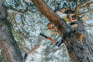 Two boys climbing pine tree