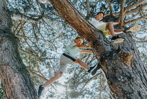 Two boys climbing pine tree
