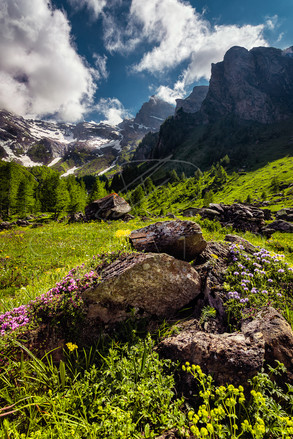 SIN-052_Alps in summer.jpg