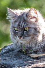 Ritratto gatto