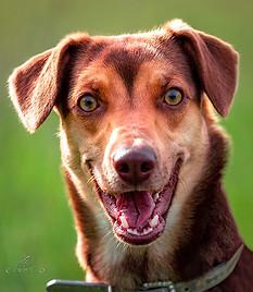 Ritratto cane