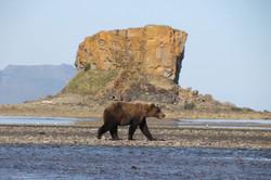 Katmai National Park brown bear fishing