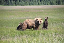 (spring cubs)