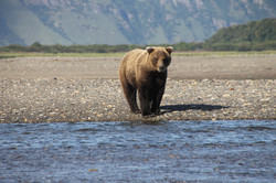 Katmai National Park brown bear fishing