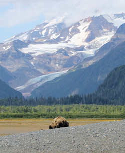 Illiamna Volcano, glaciers, brown bear