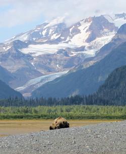 Illiamna Volcano, glaciers, brown bear