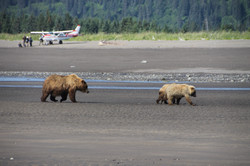 (cubs on the beach by the planes)
