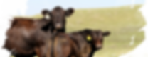 header_black_cow.png
