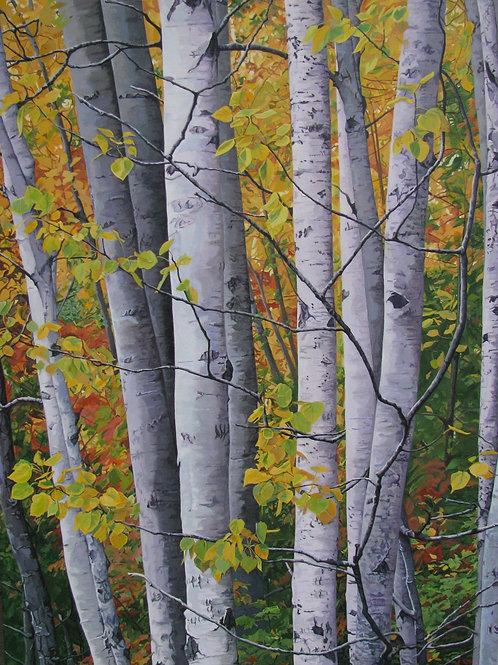 Birches in Fall Blank Notecard