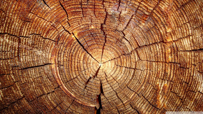 tree_rings-wallpaper-1920x1080.jpg