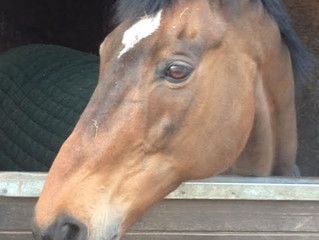 TYSON - 13 years since his Summer Cup win and enjoying retirement!