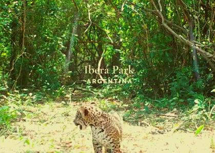 New Cub in Ibera.jpg