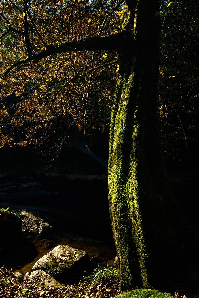 Mühlviertel, Aist, Waldaist, Fluß, Herbst