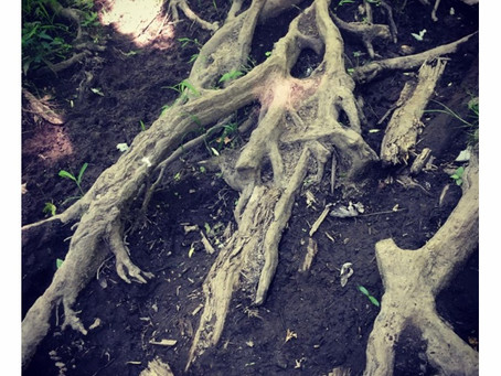 Roots are the hands of the tree