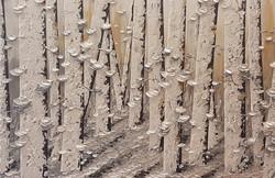 Birches At Dusk