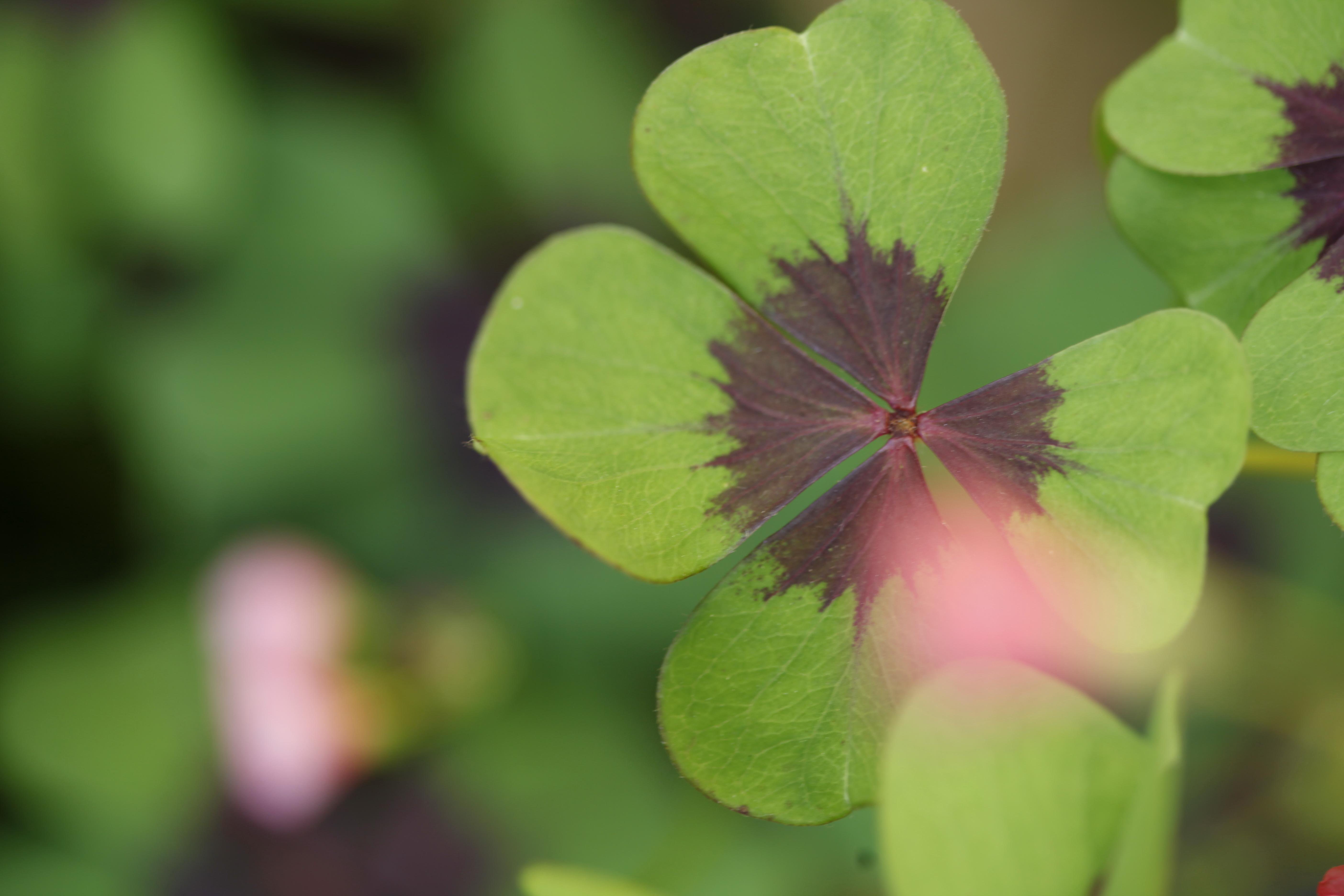 Das GrOße & das KLeiNe Glück