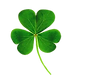 clover-removebg-preview.png