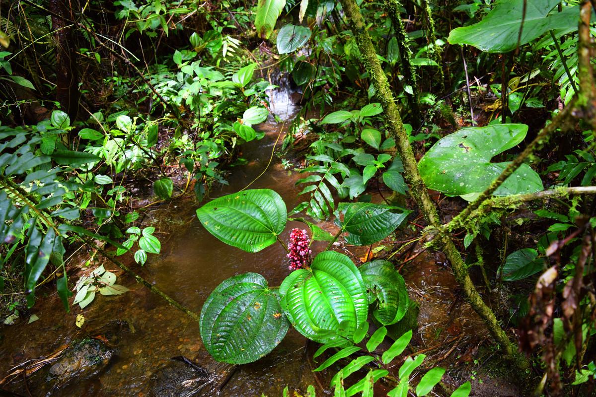 Flora del Bosque Nublado