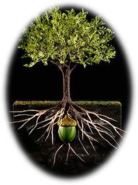 Oak_Tree 2.jpg