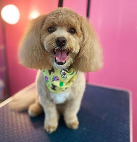 Bijou was all smiles after her groom! Sh