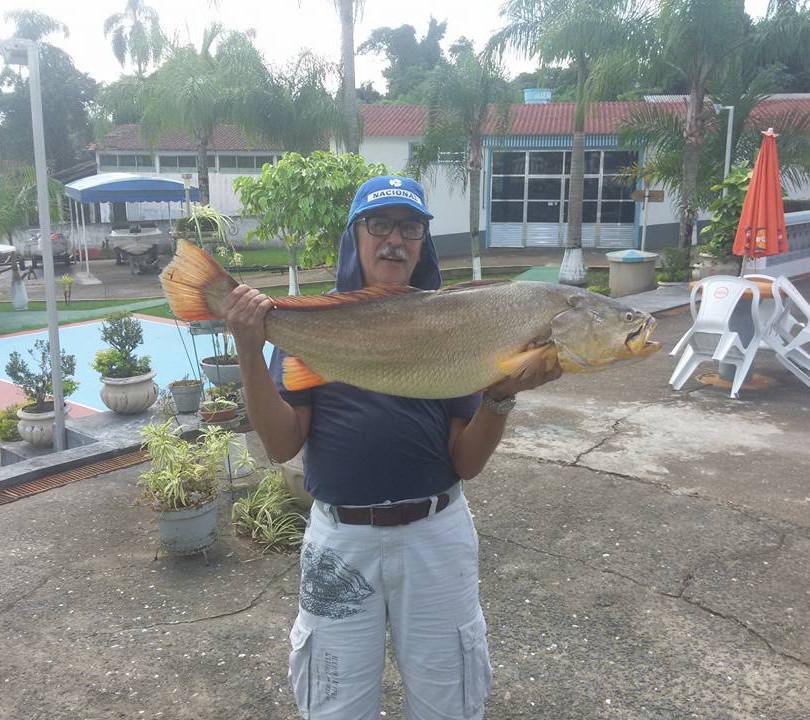 Pescada Amarela