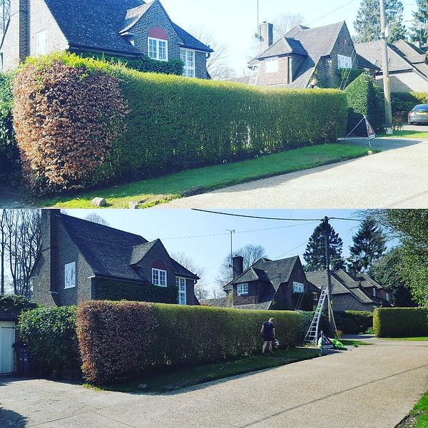 Hedgecutting Hurstpierpoint