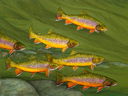 Half Dozen Brookies.jpg