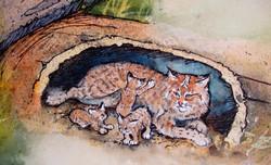 Bobcat Kits.JPG