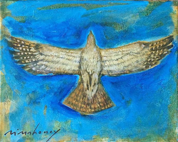 Hawk Study - 8 x 10 - 15-0318