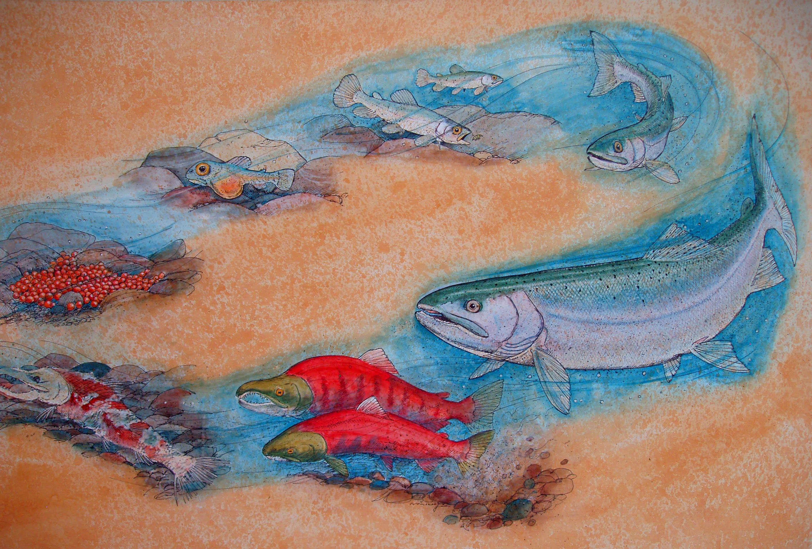 Salmon Life Cycle.JPG