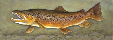 Trophy Series Brown Trout Print.jpg