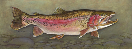 Trophy Series Rainbow Trout Print.jpg