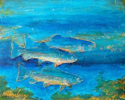 trout waters 96.jpg