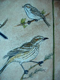 Small Birds.JPG