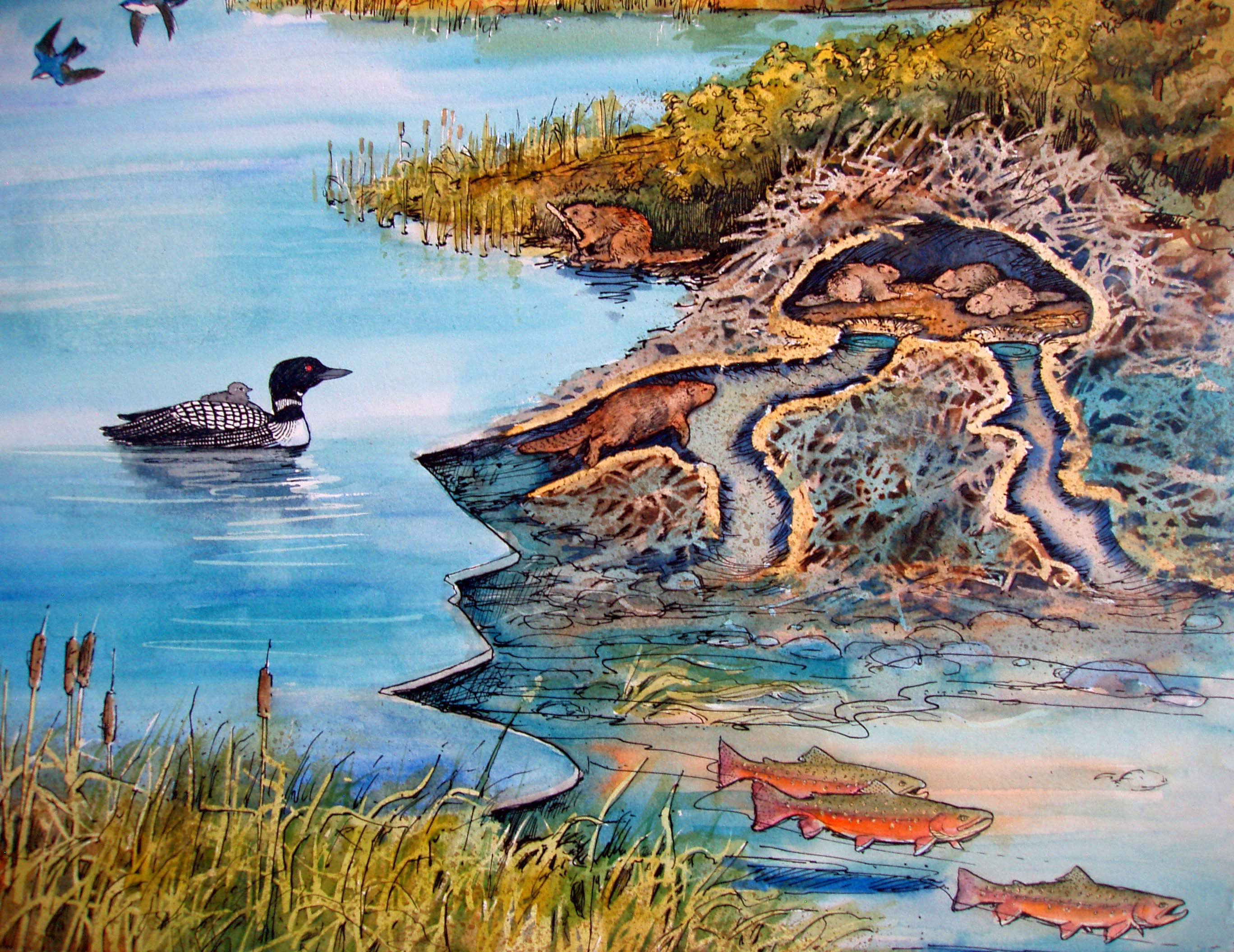 Beaver Pond.JPG