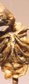 Scarecrow (detail)