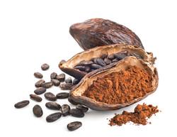 Polvere di Cacao crudo biologico