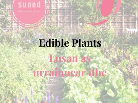 Sunnd Edible Plants_Social Media.jpg